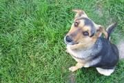 Каштанка,  умненькая и миленькая собака (девочка)